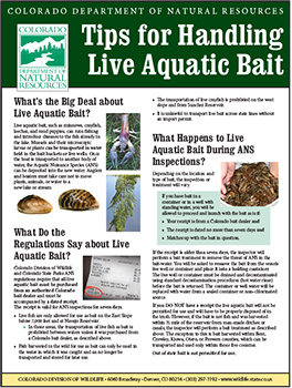 Tips for Handling Live Aquatic Bait Cover