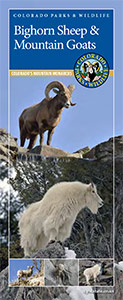 bighorn sheep and mountain goat brochure cover