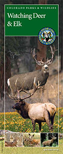 cover of deer and elk brochure