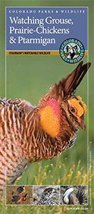 cover of grouse, prairie-chickens and ptarmigan brochure