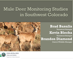 Southwest Mule Deer Studies Report Cover