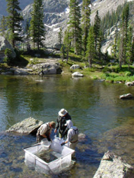 USFWS-CPW-WCO-Cutthroat-Trout-Collection. Image courtsey of US Fish and Wildlife.