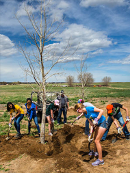 Volunteers planting a tree a Barr Lake State Park.
