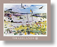 The 'Grasslands' poster from the Wild Colorado: Crossroads of Biodiversity series.