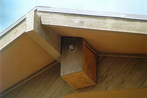 Flicker and nest box mounted under eaves. Photo © Bob Powell and used with permission.