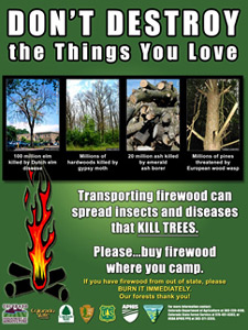 Don't Destroy the Things You Love firewood image