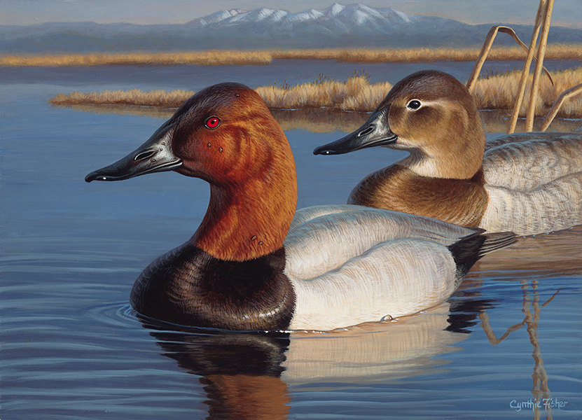 Mount Blanca Canvasbacks by Cynthie Fisher