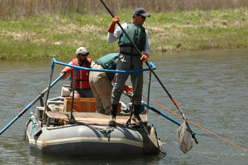 Biologists electrofishing from boat.