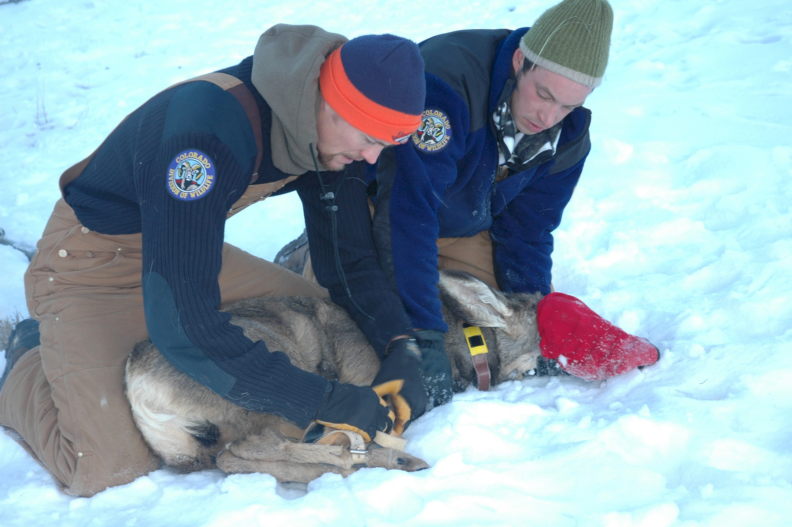 Biologist Jobs.Colorado Parks Wildlife Wildlife Researcher ...