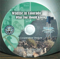 Wildlife in Colorado: What You Should Know DVD cover