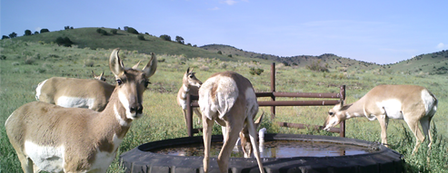 English Valley tire tank and water distribution system with pronghorn.