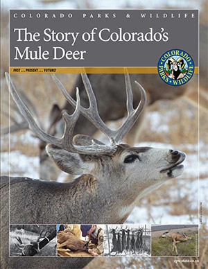 The Story of Colorado's Mule Deer