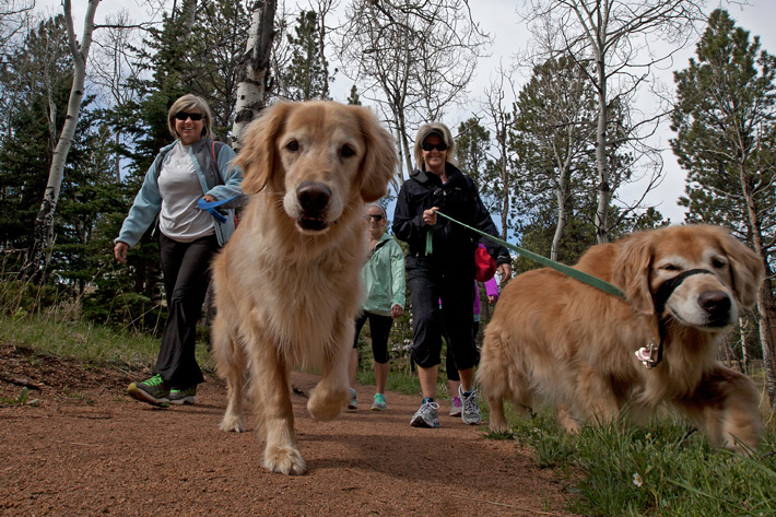 a family of hikers with two golden retriever dogs