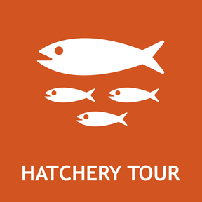 Tour a Colorado fish hatchery and  learn about how CPW protects endangered fish and manages the ecology of Colorado's waters.