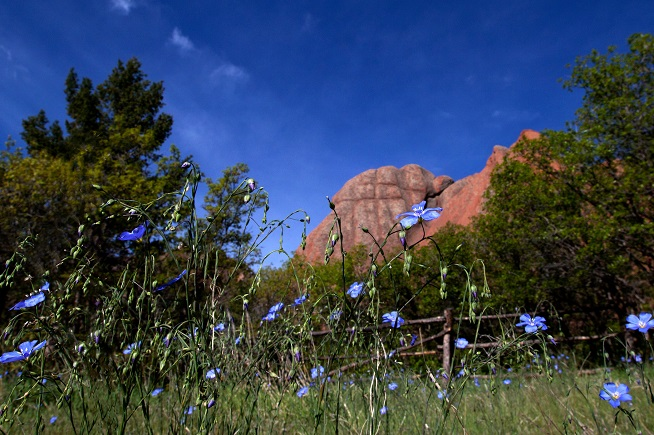 blue flowers on rocky backdrop