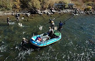 Colorado Parks & Wildlife - Mountain Whitefish