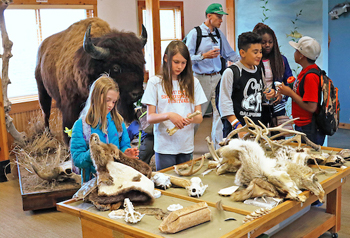 Children touch bones and furs at an interpreter table at Barr Lake