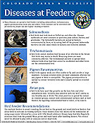 Diseases at Feeders Fact Sheet cover