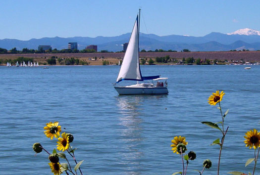 Sailboat and sunflowers