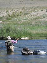 Fly fishing on the Dream Steam