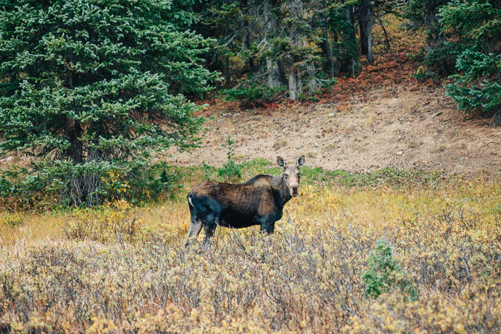 Moose at State Forest State Park